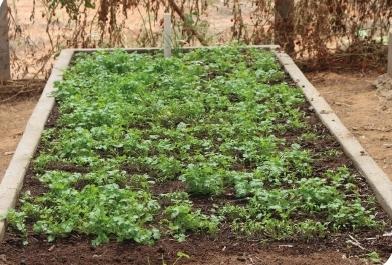 Projeto paraibano de horta orgânica ganha prêmio da ANA